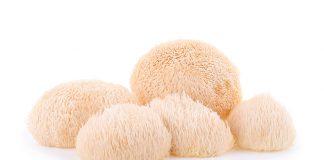 Lion`s Mane - korálovec ježatý